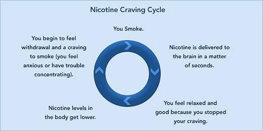 nicotine craving cycle for smokers